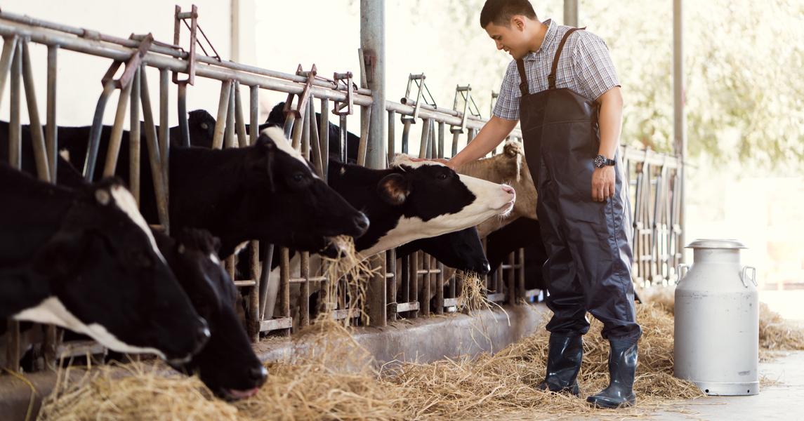 Een verhaal van een melkveehouder die door een crimineel is benaderd